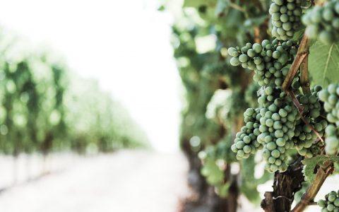 Wijndegustatie zondag 9 juni